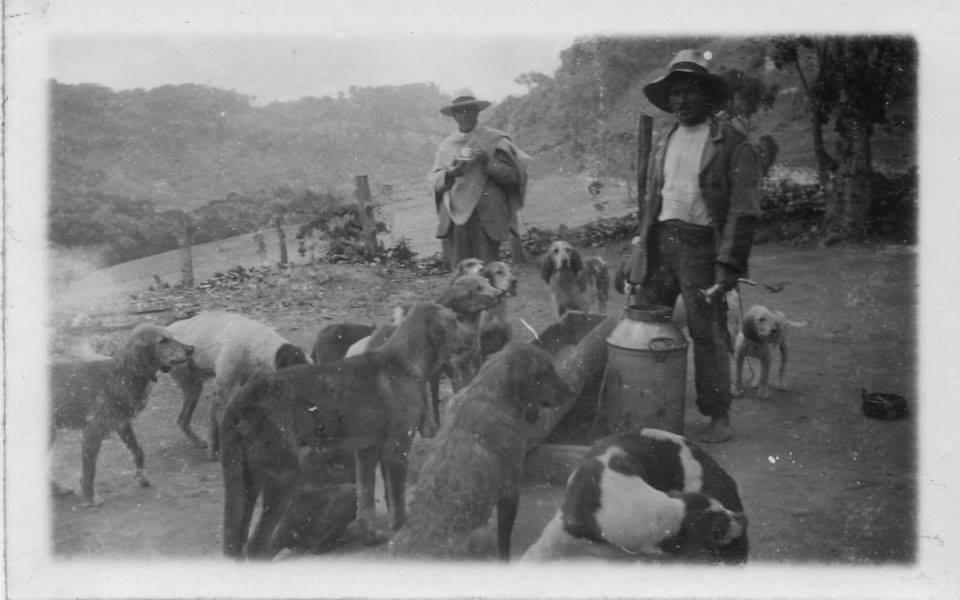 Finos en caceria de venado- mediados siglo XX