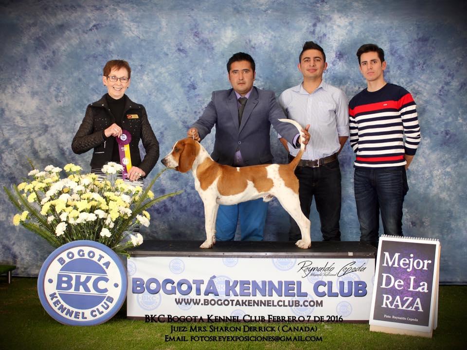 BKC 2016 (2)