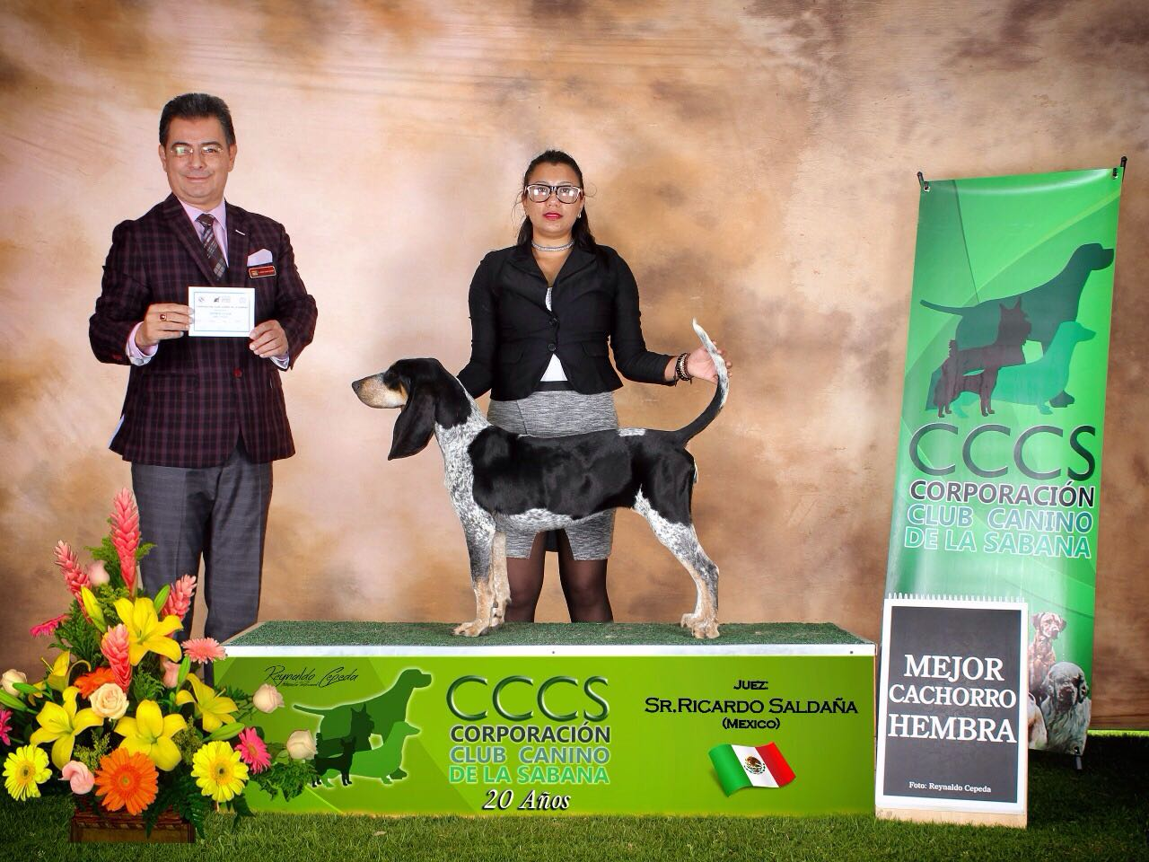 CACHORROS GUANDOLO - CARIBE COLOMBIANO